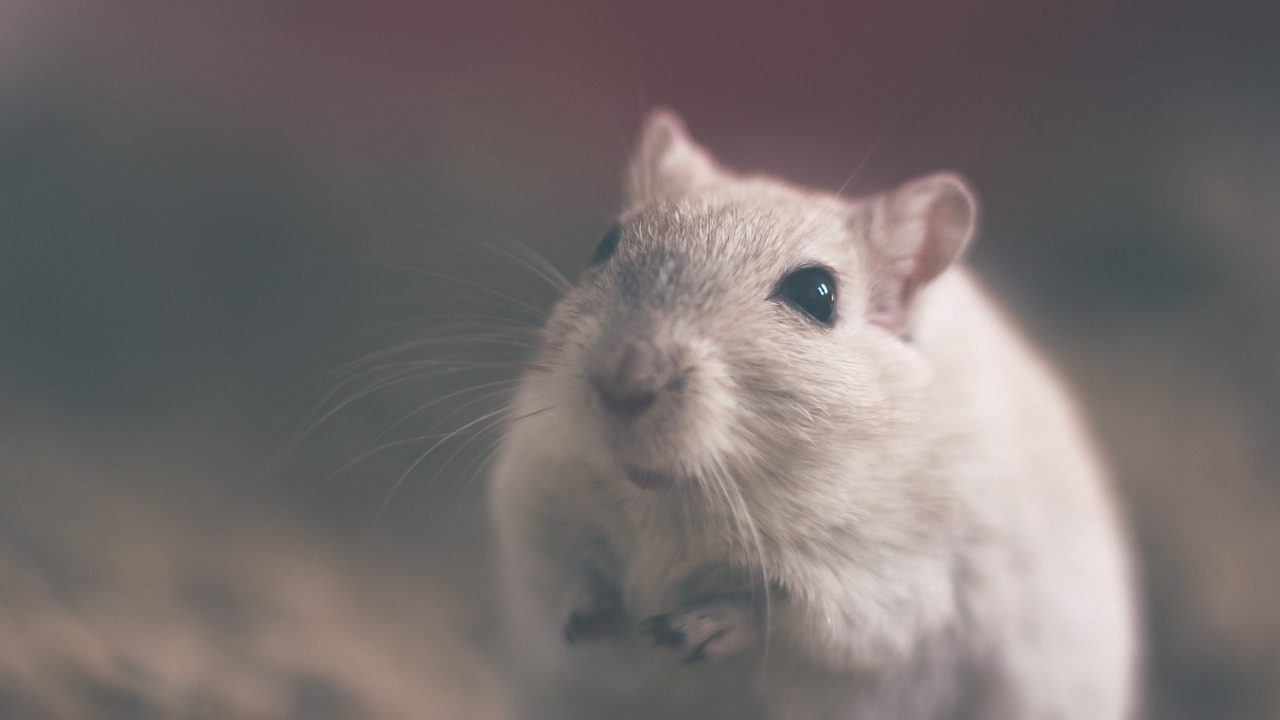 Victory! Chocolatier Barry Callebaut Bans Tests on Animals
