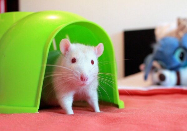 Taiwan's Third-Largest Health Food Company Bans Animal Tests
