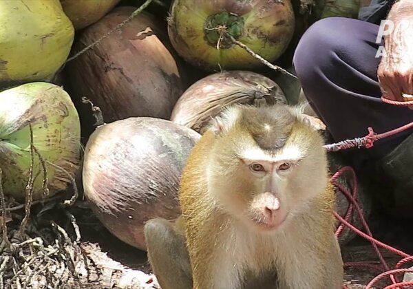 Coconut Brands That Don't Support Monkey Labor