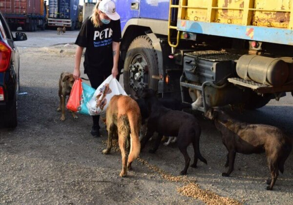 Animals in Beirut are Being Rescued by PETA UK and Local Groups