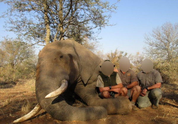 South African President's Hidden Trophy Hunting Connections and Investments Exposed