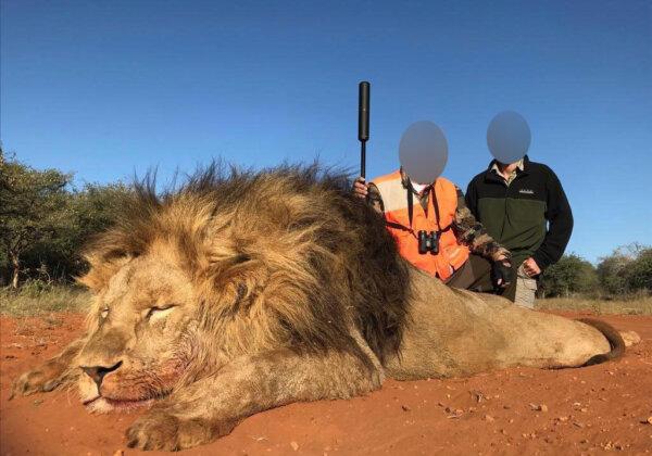 Hunter Kills Beloved Lion Outside the Same Park Where Cecil Was Killed