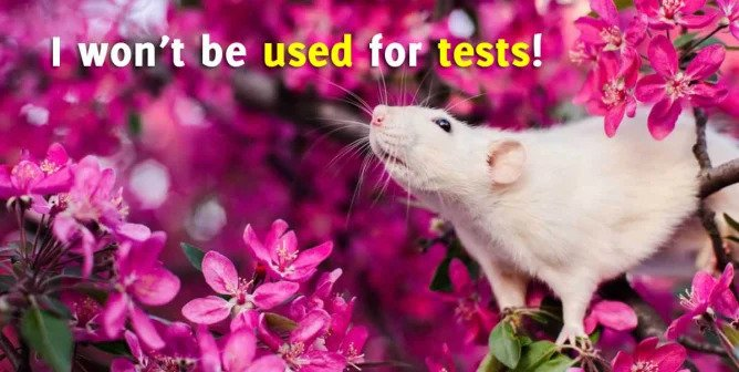 Victory! Taiwan Drops Drowning, Electric Shock Tests on Animals