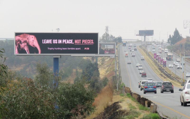 PETA Trophy Hunting Billboard Johannesburg South Africa