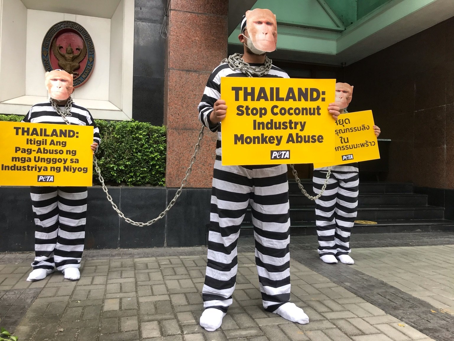 Photos: Chained 'Monkeys' Protest Thailand's Cruel Use of Monkeys for Coconut Milk