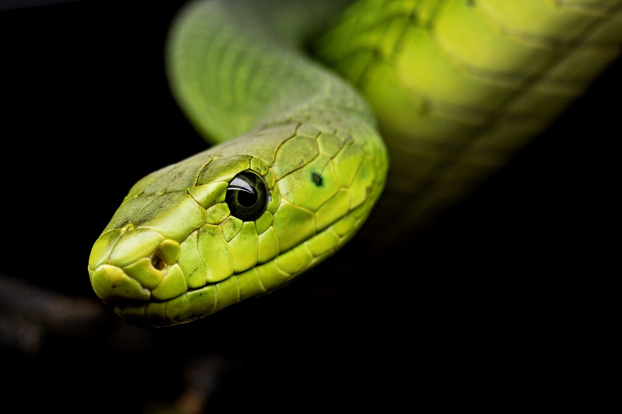 """A Spa in Egypt Is Offering """"Snake Massages"""", but They're a Cruel Gimmick"""