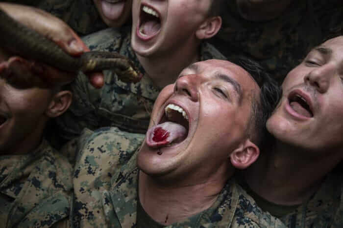 Training or Animal Abuse? Military Personnel Behead Cobras, Drink Their Blood