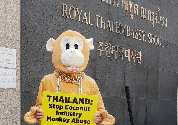 Why Did This Angry 'Monkey' Dump a Pile of Coconuts at the Thai Embassy in Seoul?