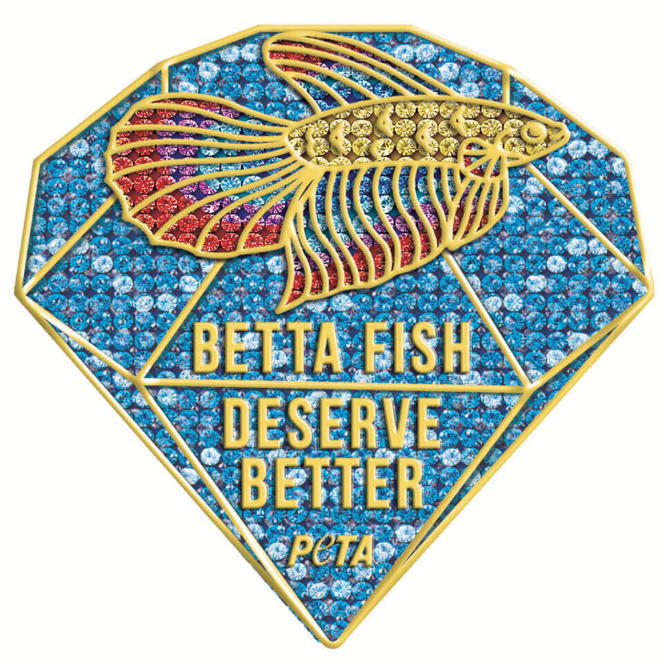 Dear Miss Universe Thailand: Show Compassion to Betta Fish!