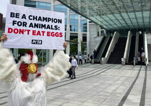 Why Did This 'Chicken' Protest Outside the Olympics HQ in Tokyo?