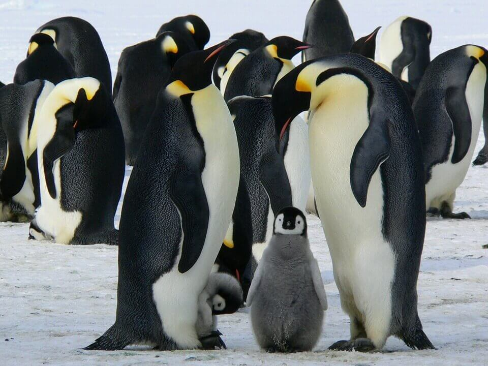 Celebrate the Fantastic Fathers Who Have Fins, Feathers, or Fur This Father's Day
