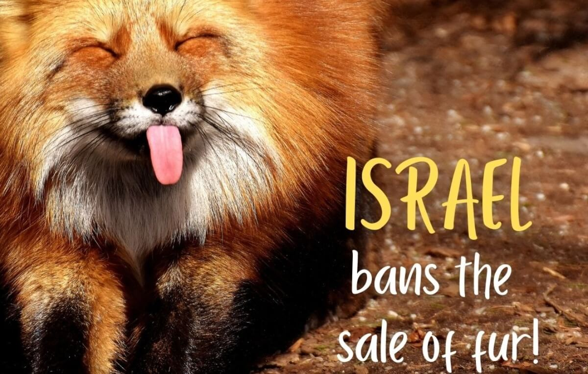 Israel Becomes First Country Ever to Ban Fur