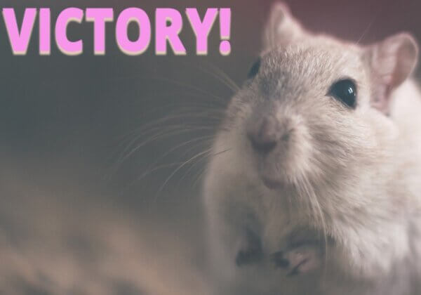 Victory! Taiwan's Largest Health Food Company Issues Historic Ban on Animal Testing