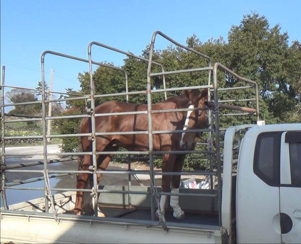 PETA Slams South Korean Officials for Erasure of Horse Slaughter Records