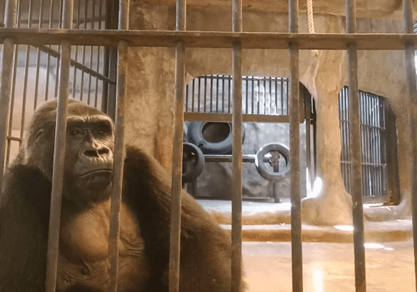 Tenants Are Leaving This Thai Department Store in Droves Because of the Decrepit Pata Zoo