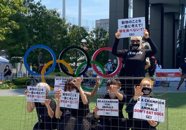 Photos: Caged Activists in Tokyo Protest Olympic Egg Cruelty
