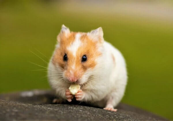 Victory in Taiwan! Lian Hwa Foods Corp. Bans Animal Tests