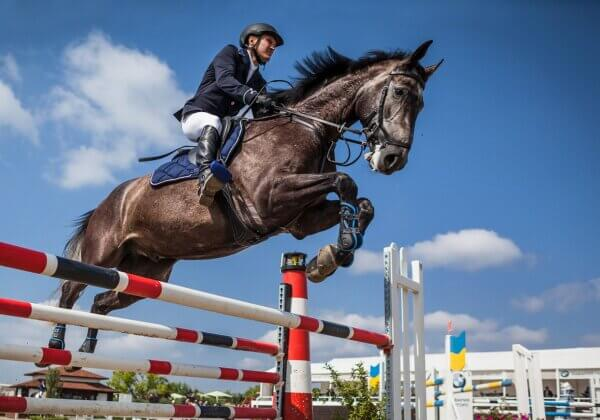Horse 'Jet Set' Is Euthanized After Competing at the Tokyo Olympics