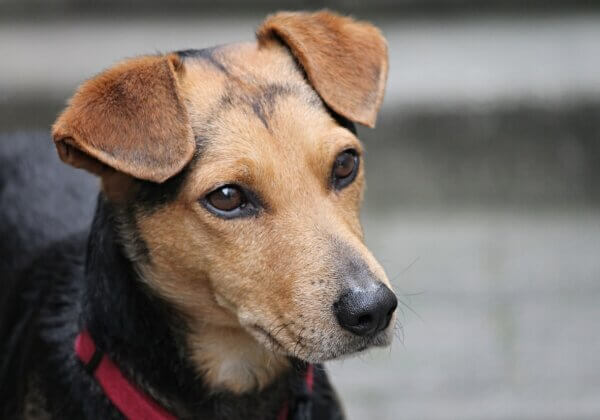 Tell Authorities in Vietnam to Stop Killing Dogs and Cats Over COVID-19 Myths